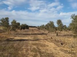 Venta terrenos en Ciudad Real | Carretera de Carrión